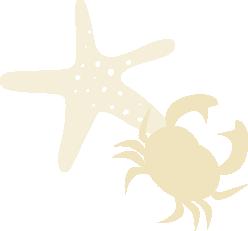Ster krab