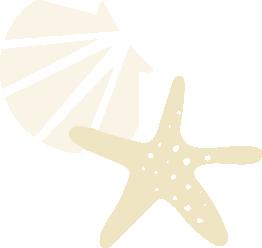 Ster schelp