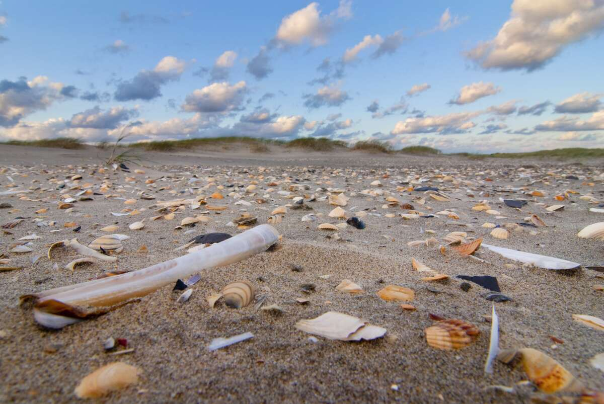 Het Groene Strand lanceert eerste groene stranden van Nederland in drie provincies